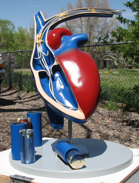 spectranetics-foam-heart-sculpture-for-tradeshow-display