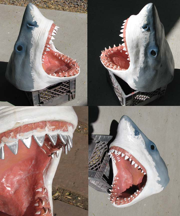 denver-aquarium-shark-head
